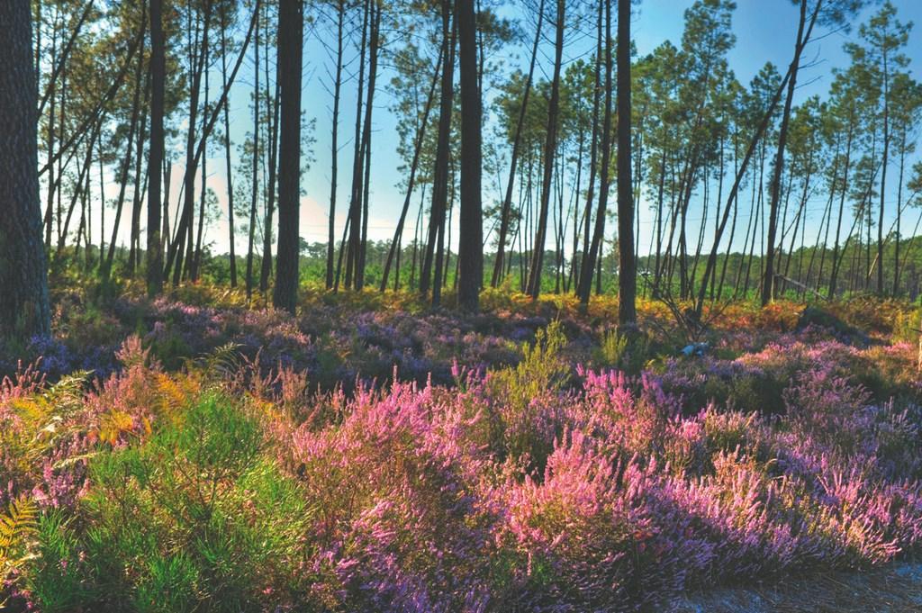 La plus grande forêt d'Europe ! - Crédit : CDT des Landes