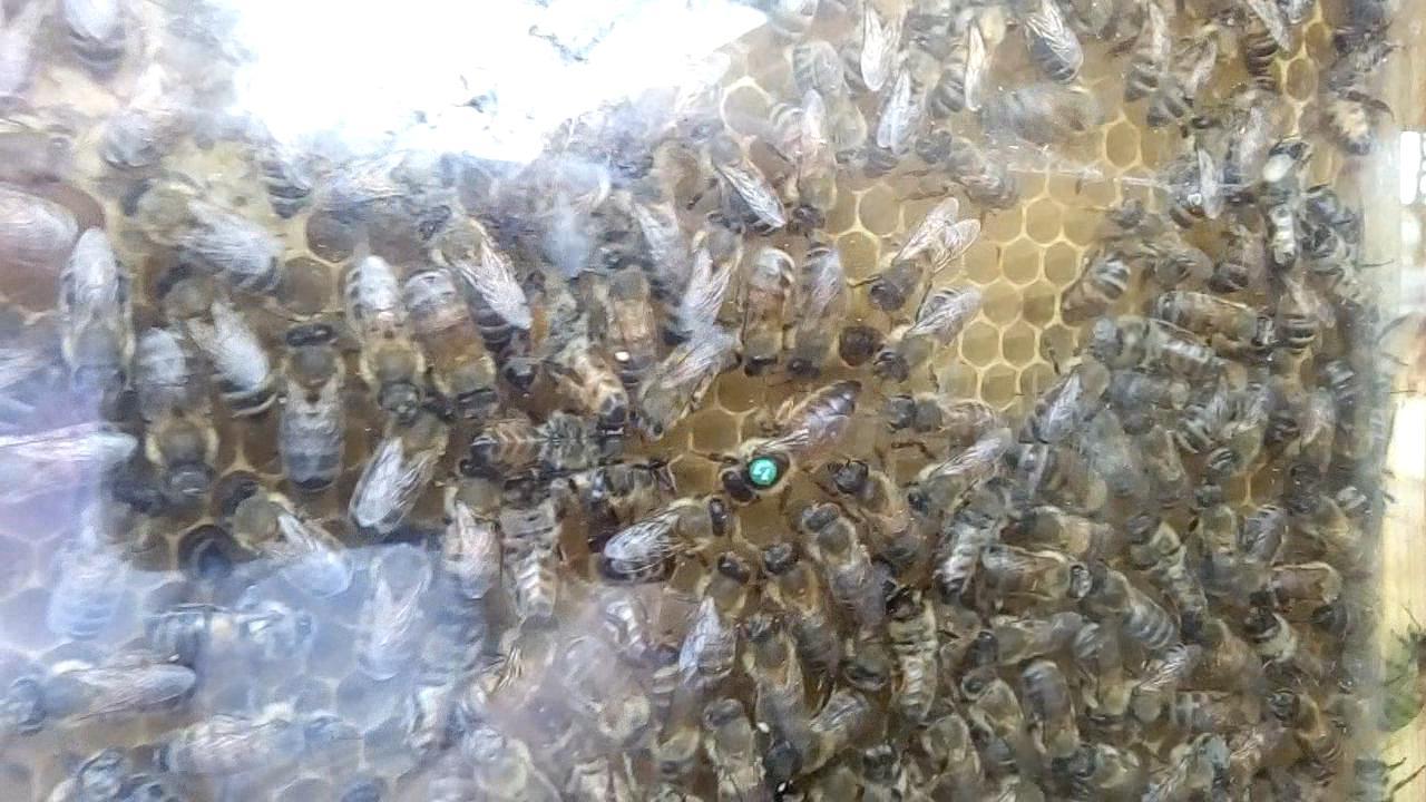 Bienenschauvolk einrichten