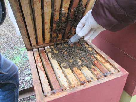 Varroabekämpfung