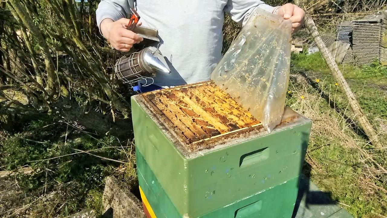 Frühjahrsdurchsicht zweizargig überwinterter Bienenvölker