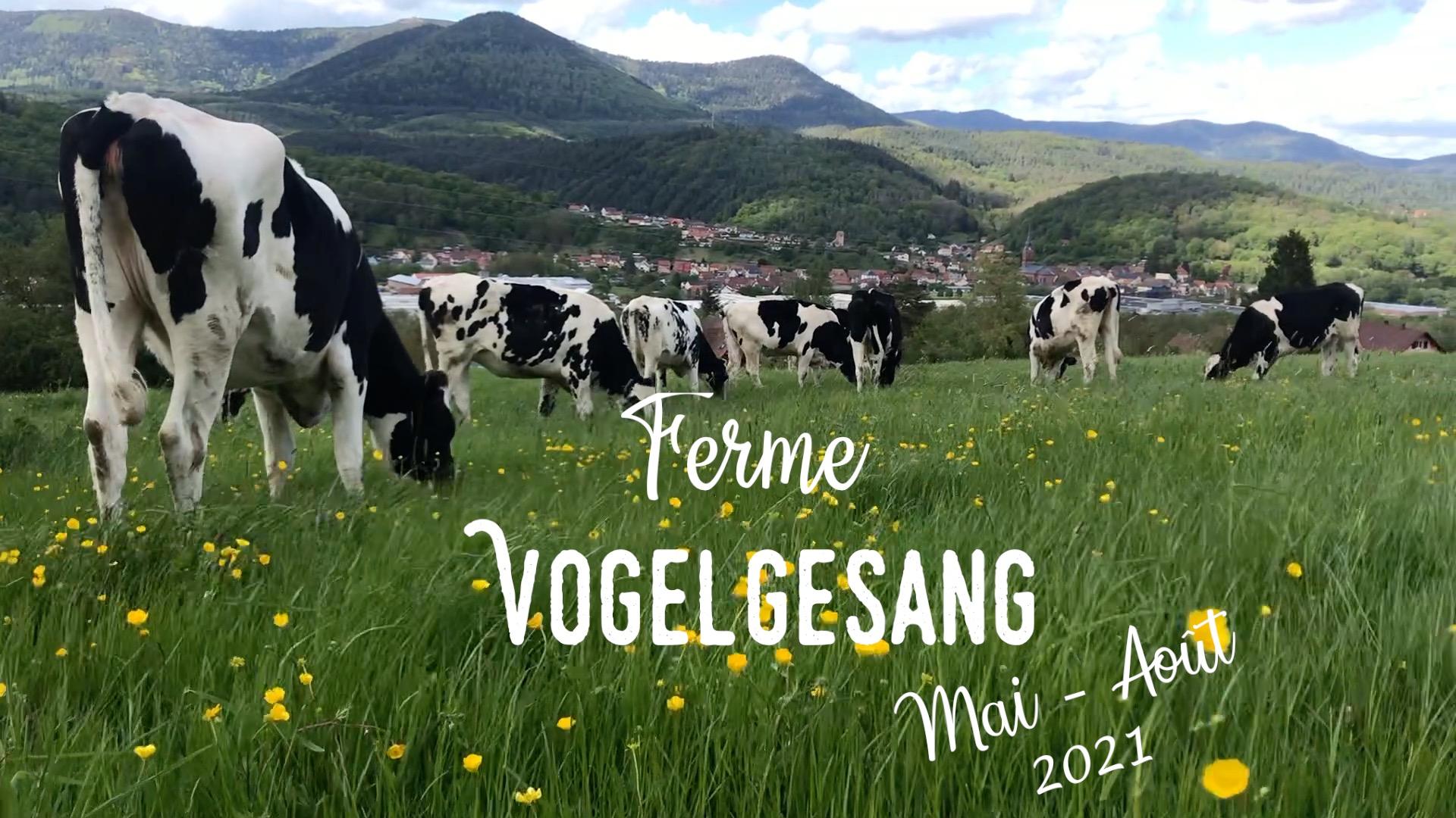 Notre 1er Vlog : Vie à la ferme