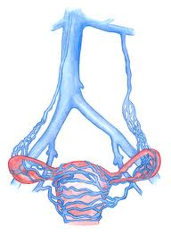 Pain during menstruation, painful intercourse and pain in the back of the leg when standing all are symptoms of pelvic congestion syndrome. Some patient have more proximal disease in the iliac veins, ovarian veins and this can be treated.
