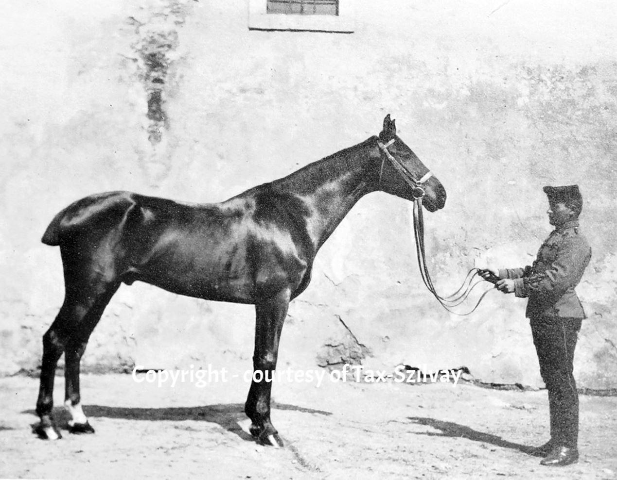 Pferdemusterung, verm. das Turnierpferd von Tax-Szilvay