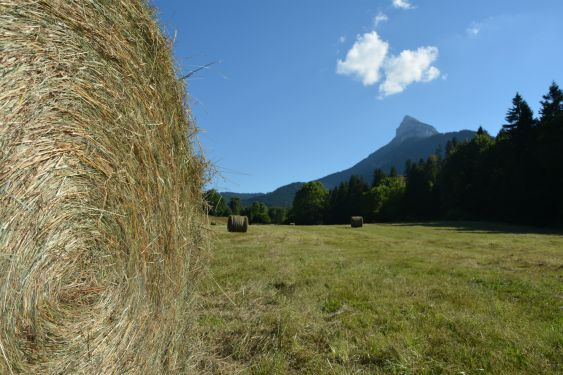 Pension-Alpes-Horse-Boarding-Alps-Pferdepension