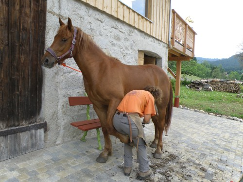 Services-Pension-Chevaux-Rhône-Alpes-Horse-Boarding-Alps-Pferdepension