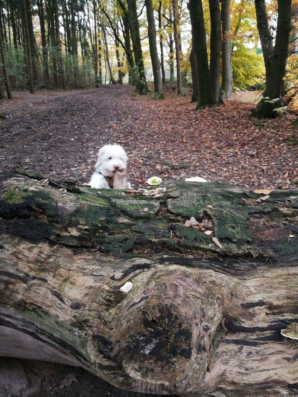 Macht schon fleißig Suchübungen im Wald