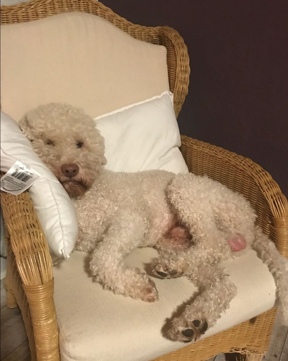 Der Sessel ist aber was gemütlich......