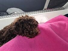 Cookie muss seetüchtig werden - Urlaub auf dem Boot