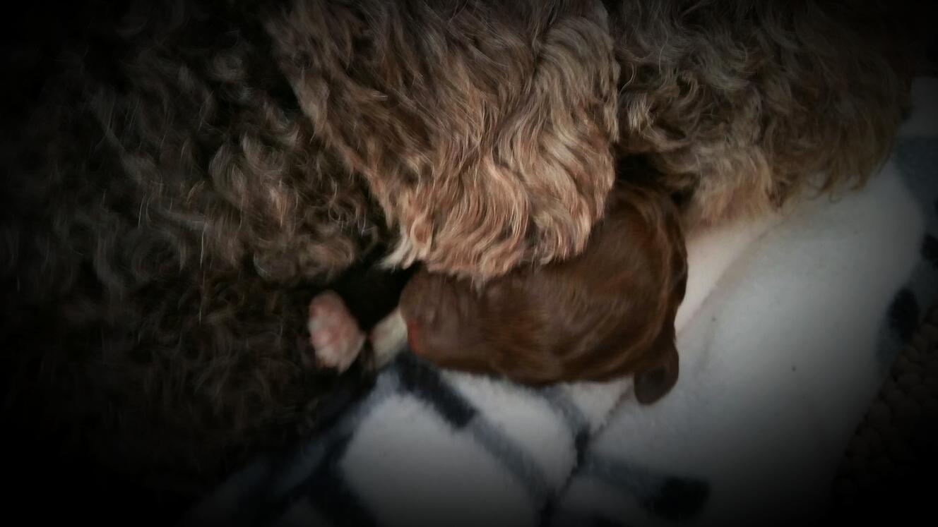 Unter dem Kinn von Mama kuscheln