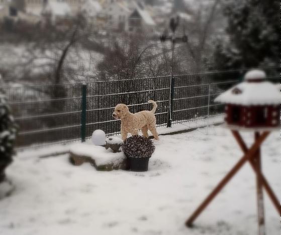 Toll so viel Schnee im Garten!