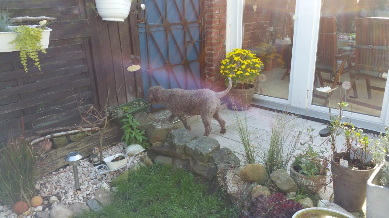 Ist aber immer noch wachsam - die Kaninchen hinterm Zaun werden genau beobachtet.
