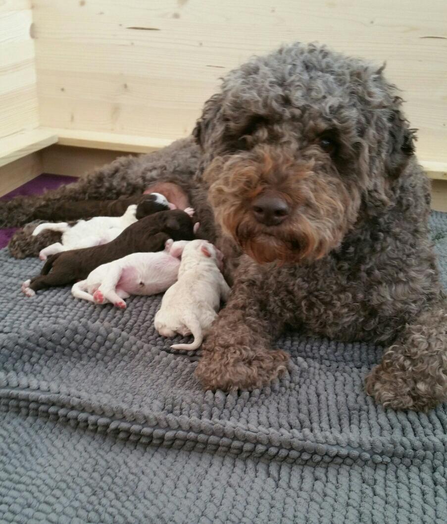 Milka und ihre 6 Mädels!