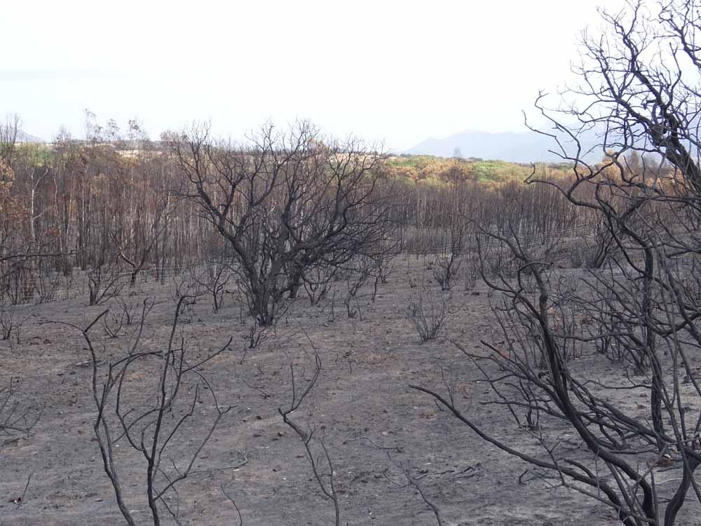 Flächenbrand im Sommer