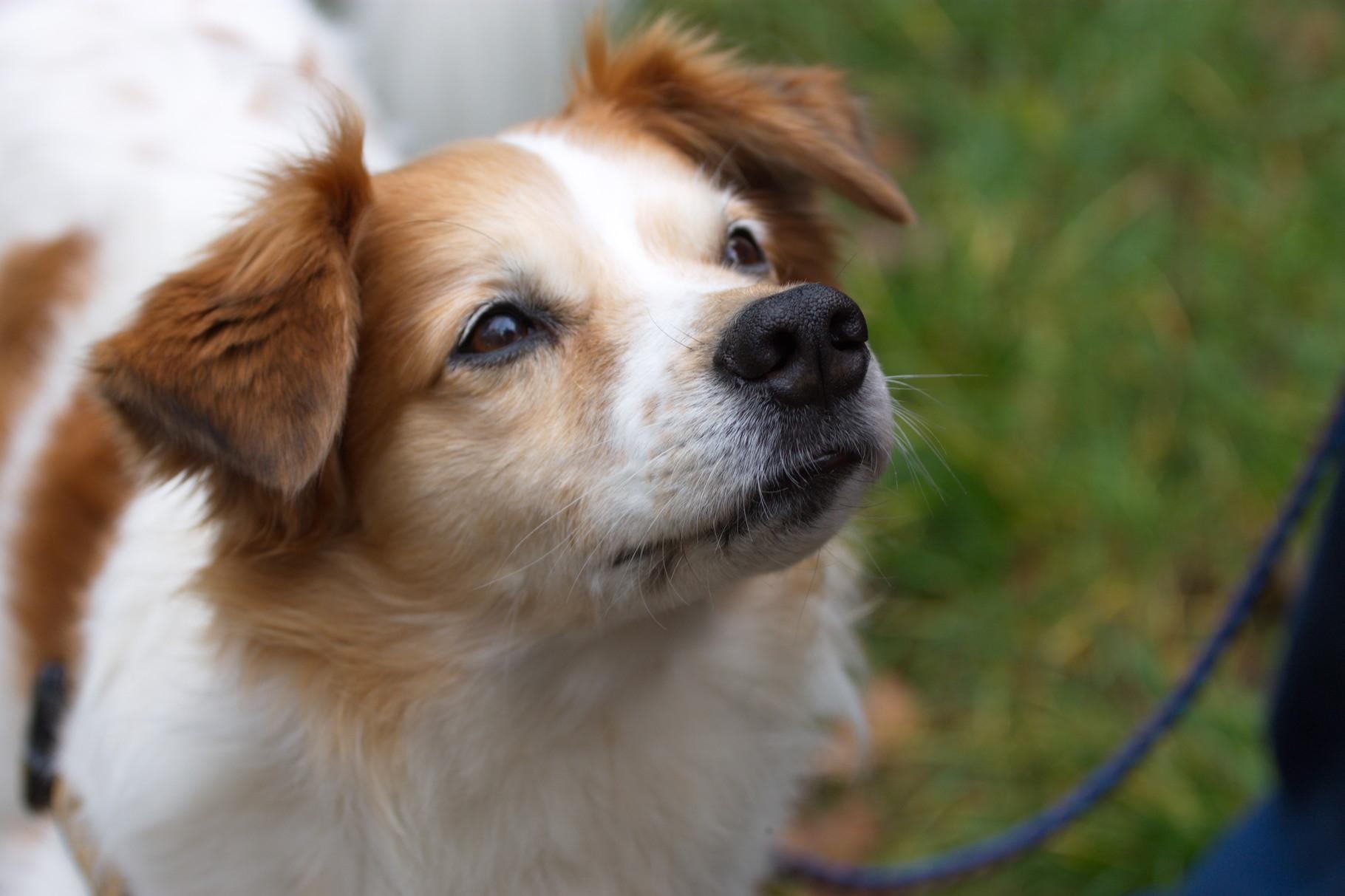 Erstmal erfolgte die Vorstellung der Hunde...hier ist Barney vom fünfzinnigen Hochzeitsturm