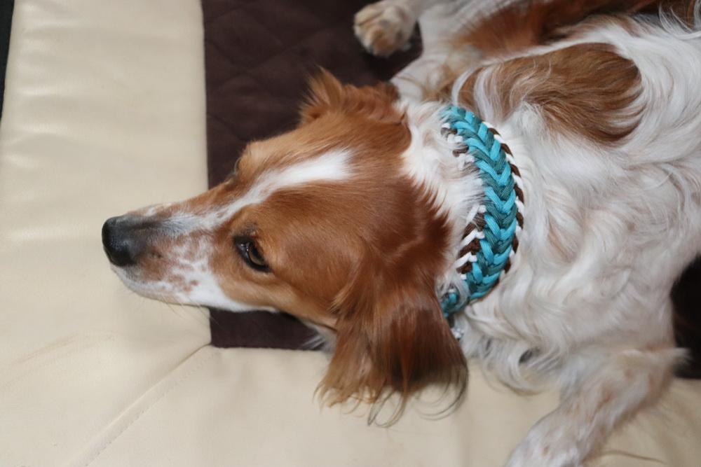 ..und ein tolles Halsband hab ich bekommen von www-moba-dogs.de