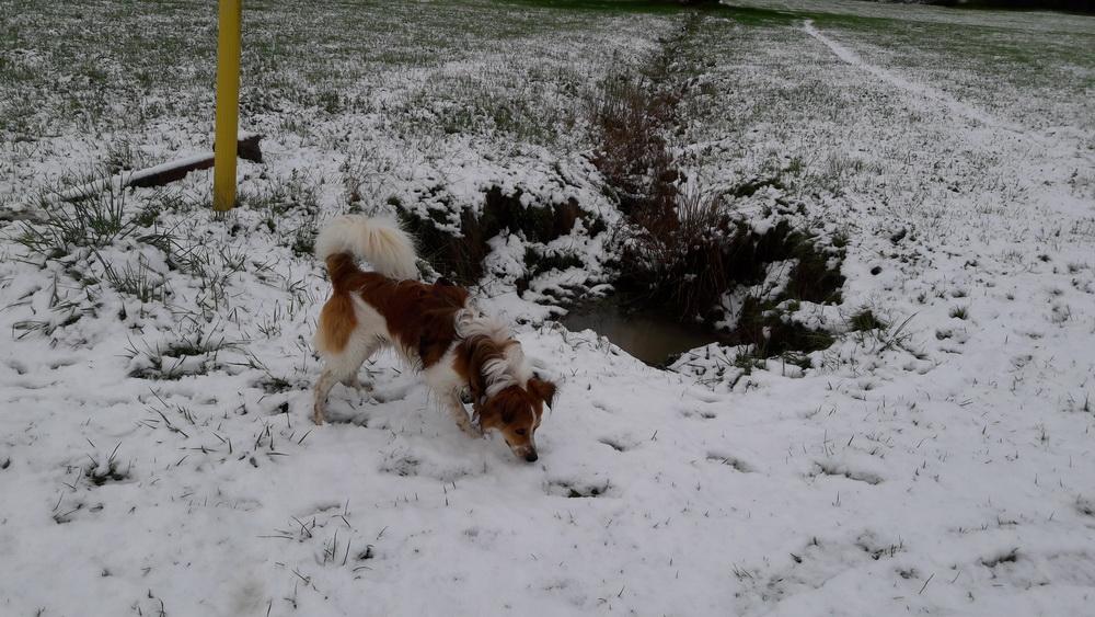 nochmal Schnee, ein nettes Vergnügen für einen halben Tag