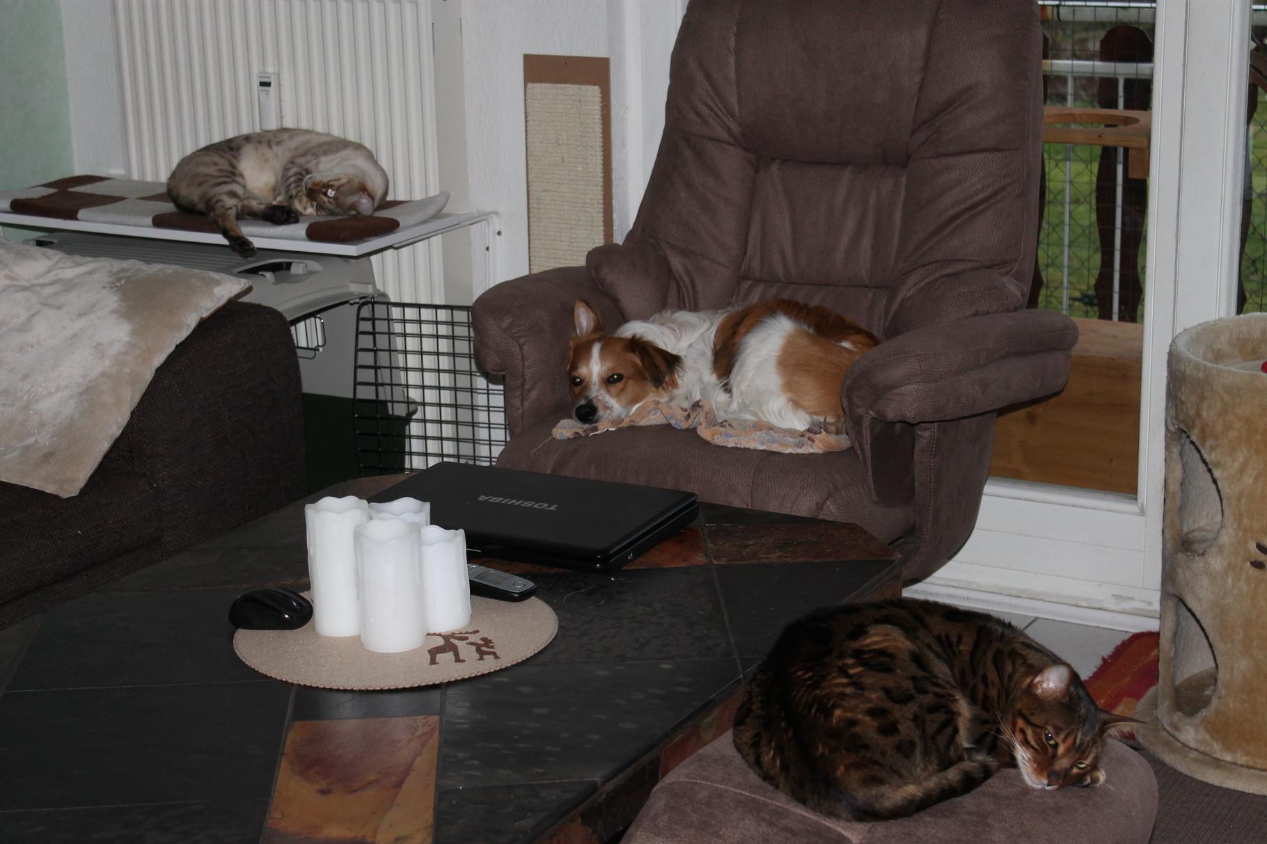 Die besten Plätze für meine Katzenkumpels und mich...