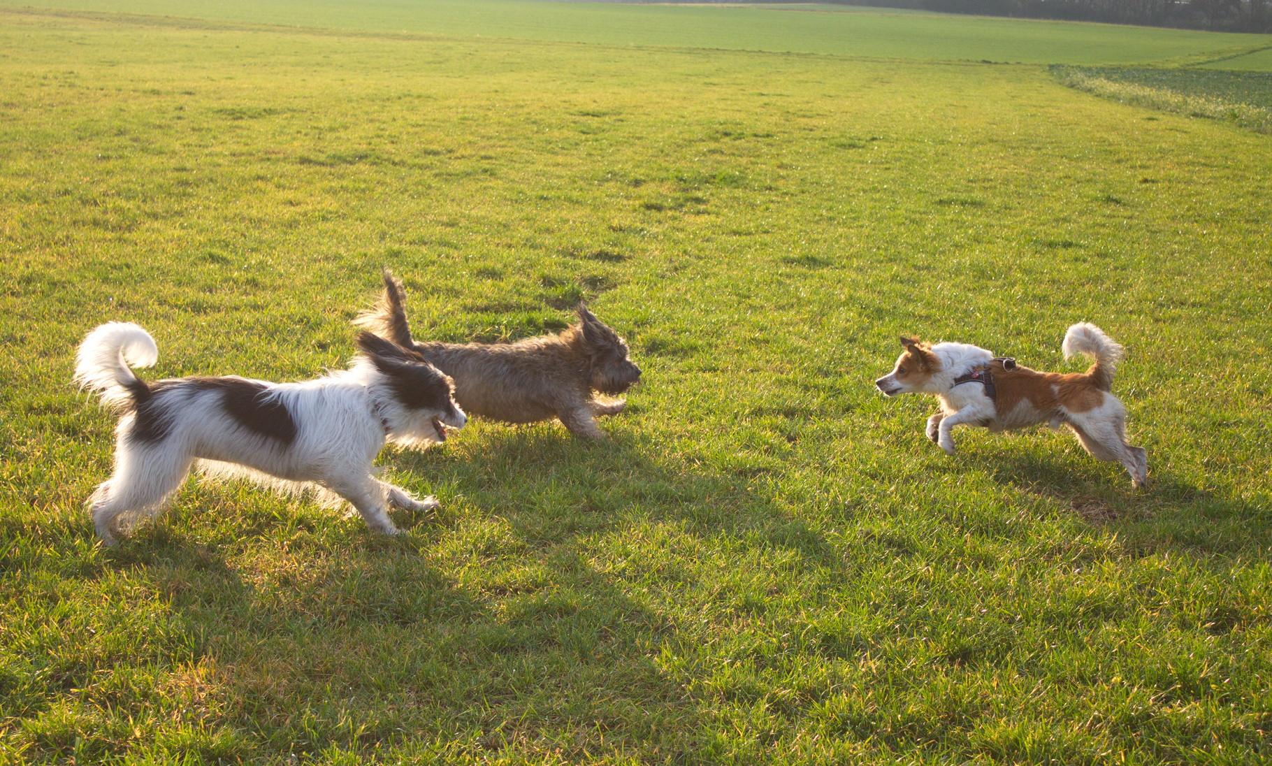 Draußen rumsausen mit Bella und Bonito...suuuper, das versuchen wir einmal pro Woche hinzukriegen:-)