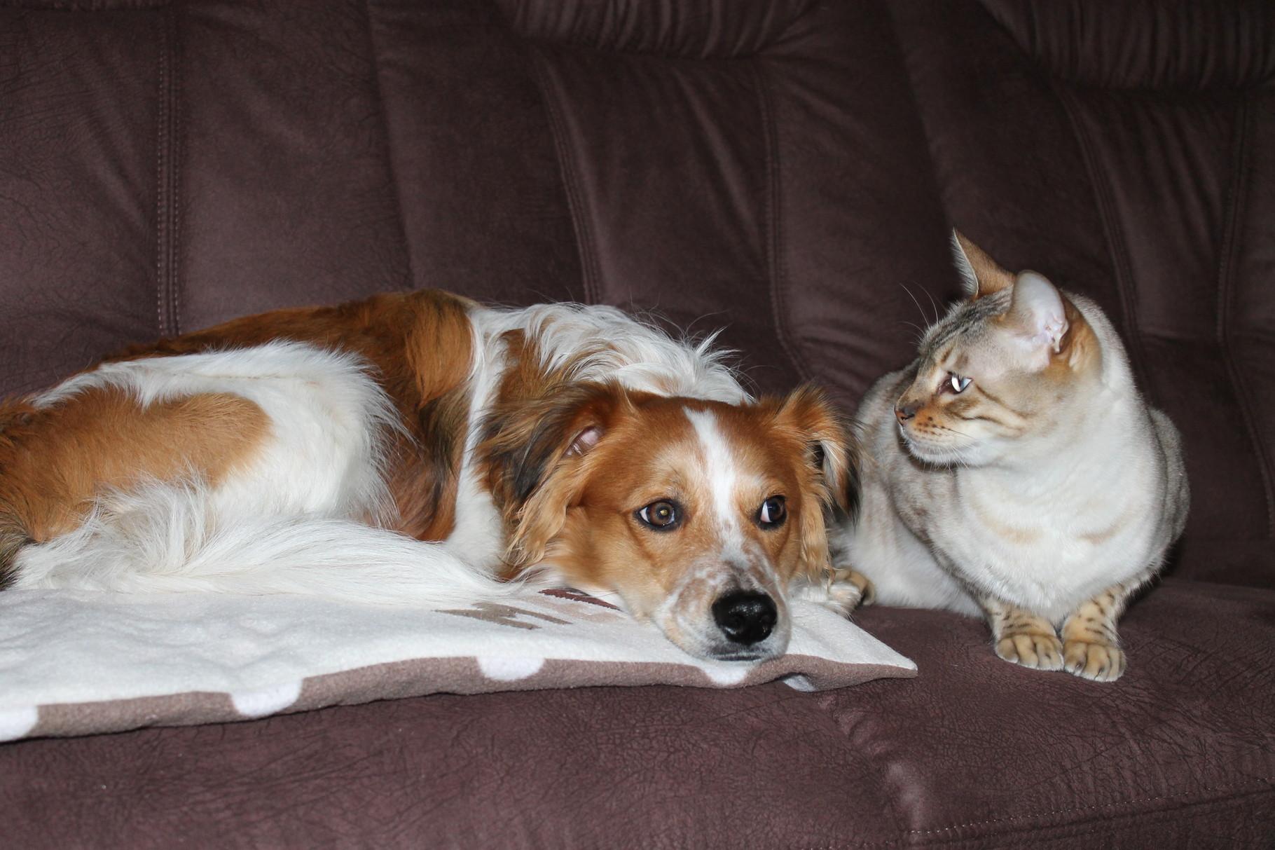 ahhh, neues Sofa andlich da...
