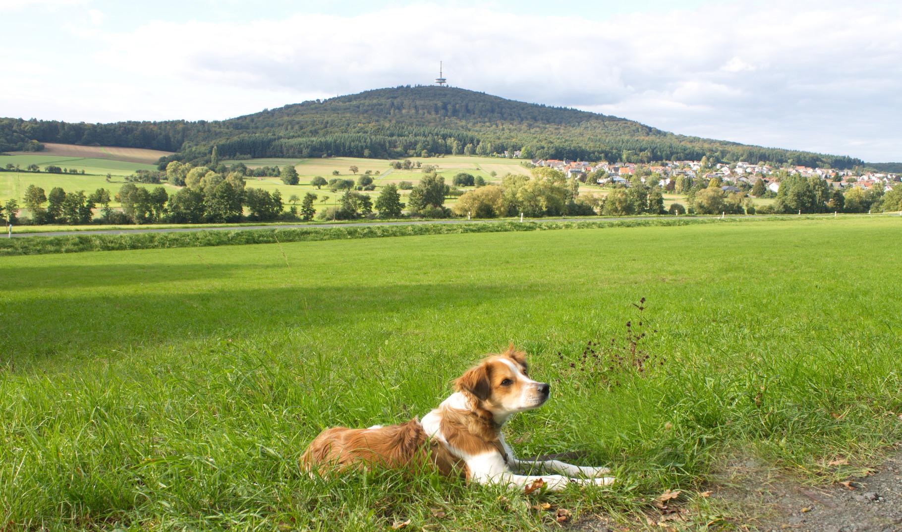 Hier musste ich wieder posen für Frauchens Kamera. Im Hintergrund der Dünsberg, zu dem wir immer laufen und rechts Fellingshausen,wo wir wohnen.