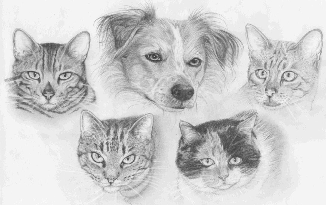 Zusammen mit allen Katzen des Hauses als Bleistiftzeichnung! Sowas Tolles hat uns www.melissakilich.de gemalt ..und originalgetreu!!!