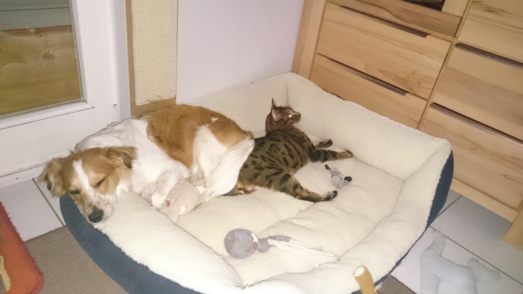 Mein Katzenkumpel Merlin ist richtig aufgetaut und mir ein guter Freund geworden!