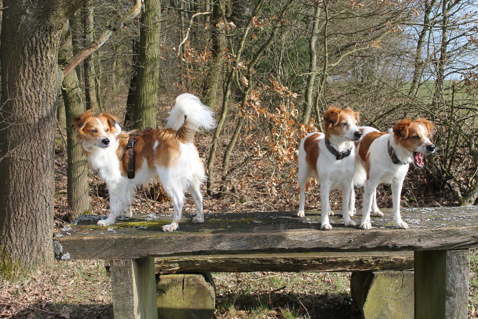 Chester mit seinen Freundinnen Aisha und Aivy vom Licher Turm
