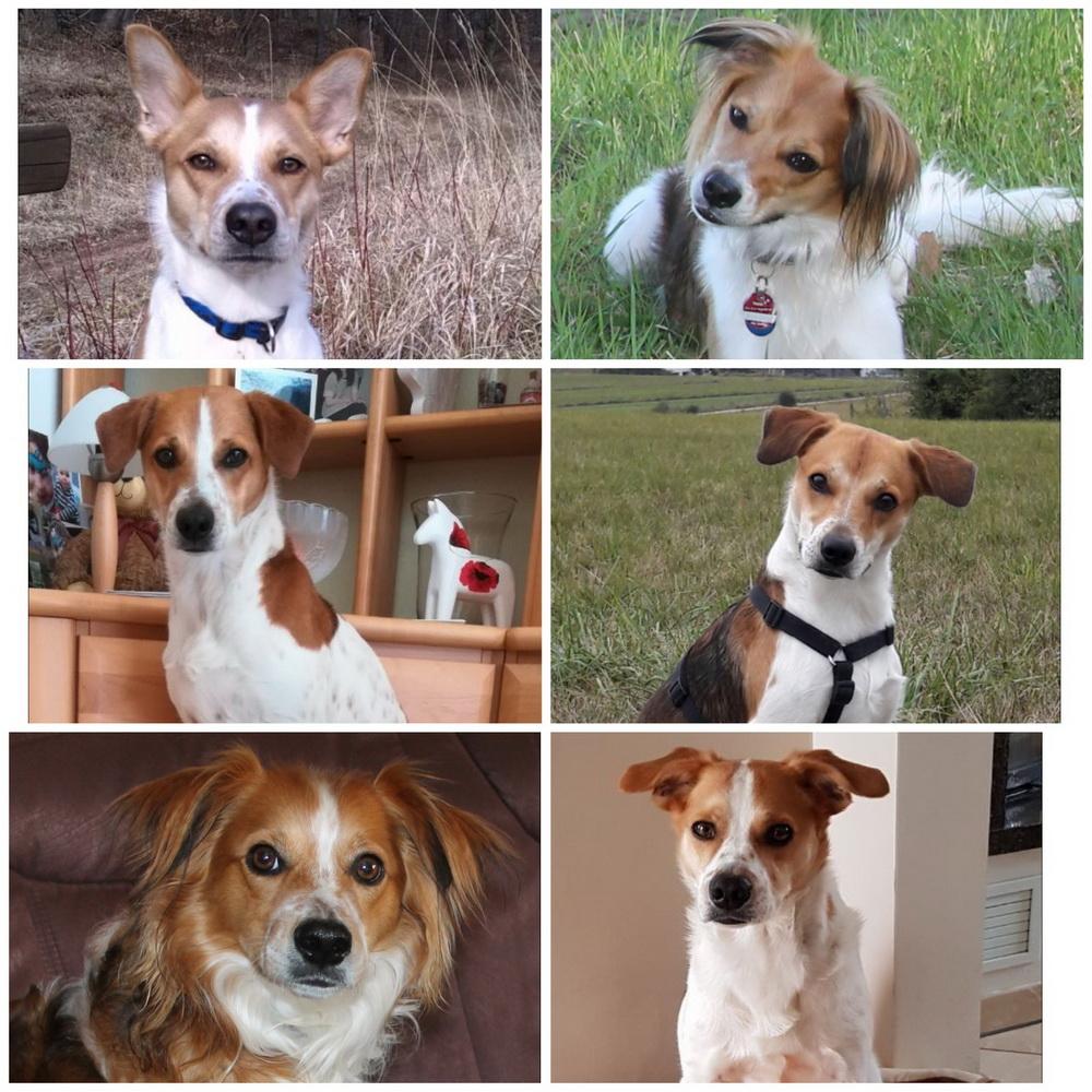 Collage zum 3 Geburtstag, mit frischen Fotos von Cassy,Conner, Casper und mir:-)