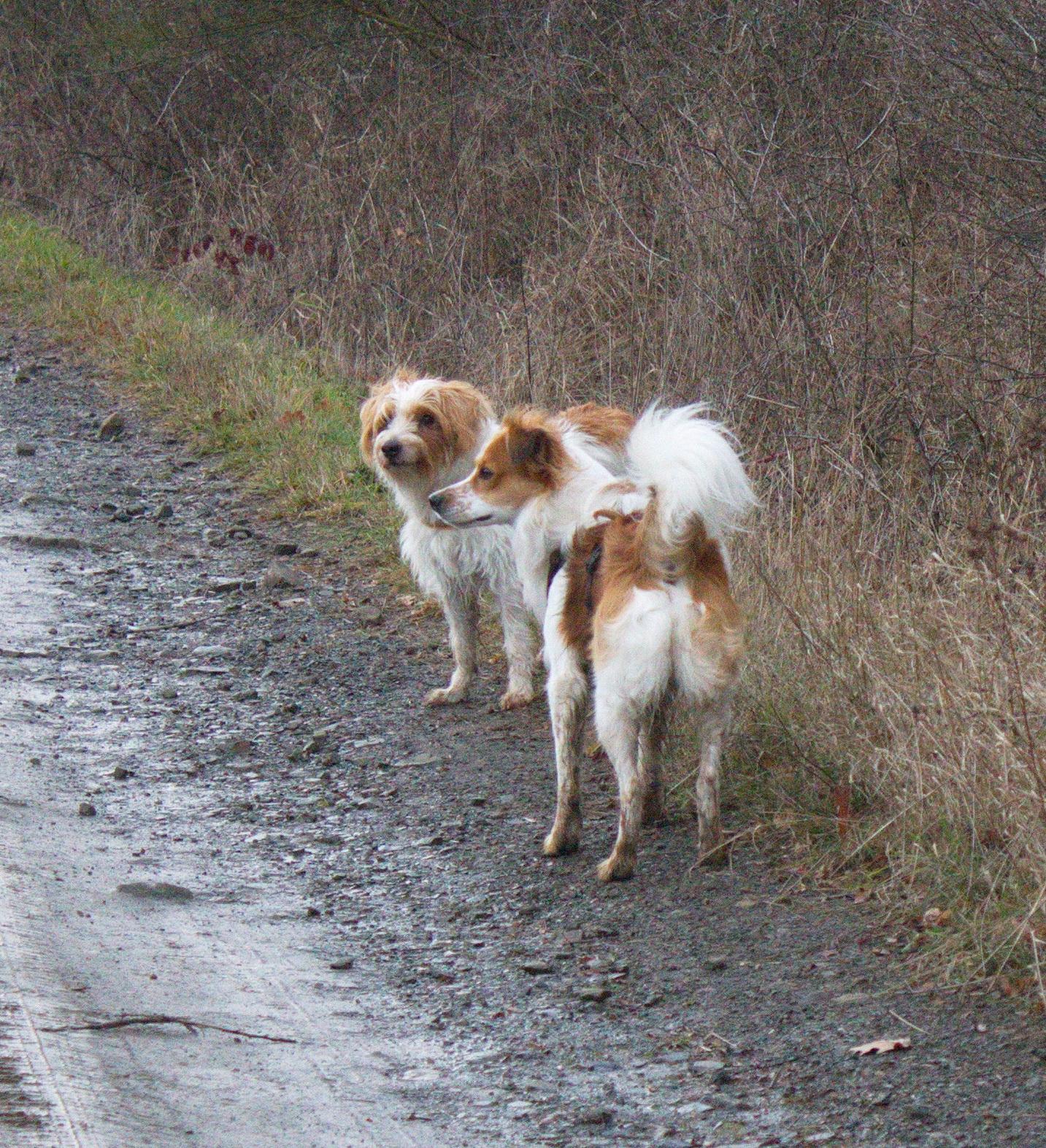 Bella und Chester