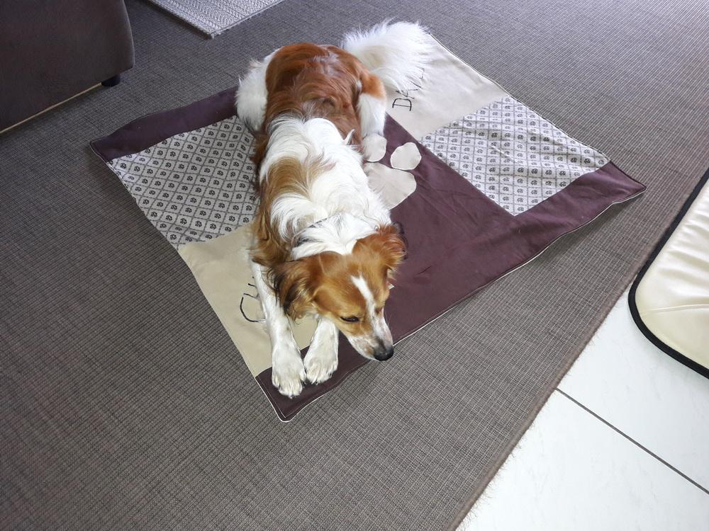 Frauchen hat für Auswärtsbesuche eine neue Decke genäht