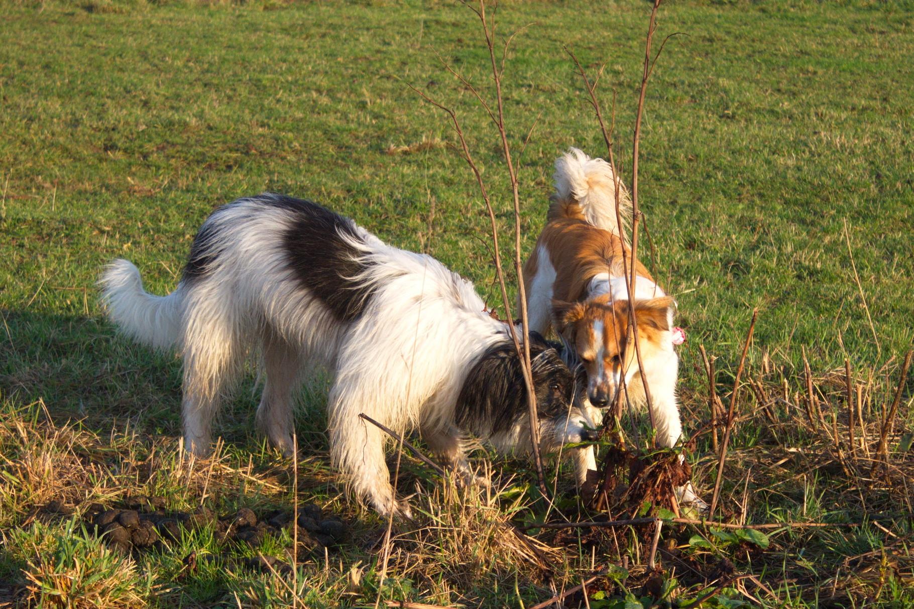 Schnüffeln mit Bella