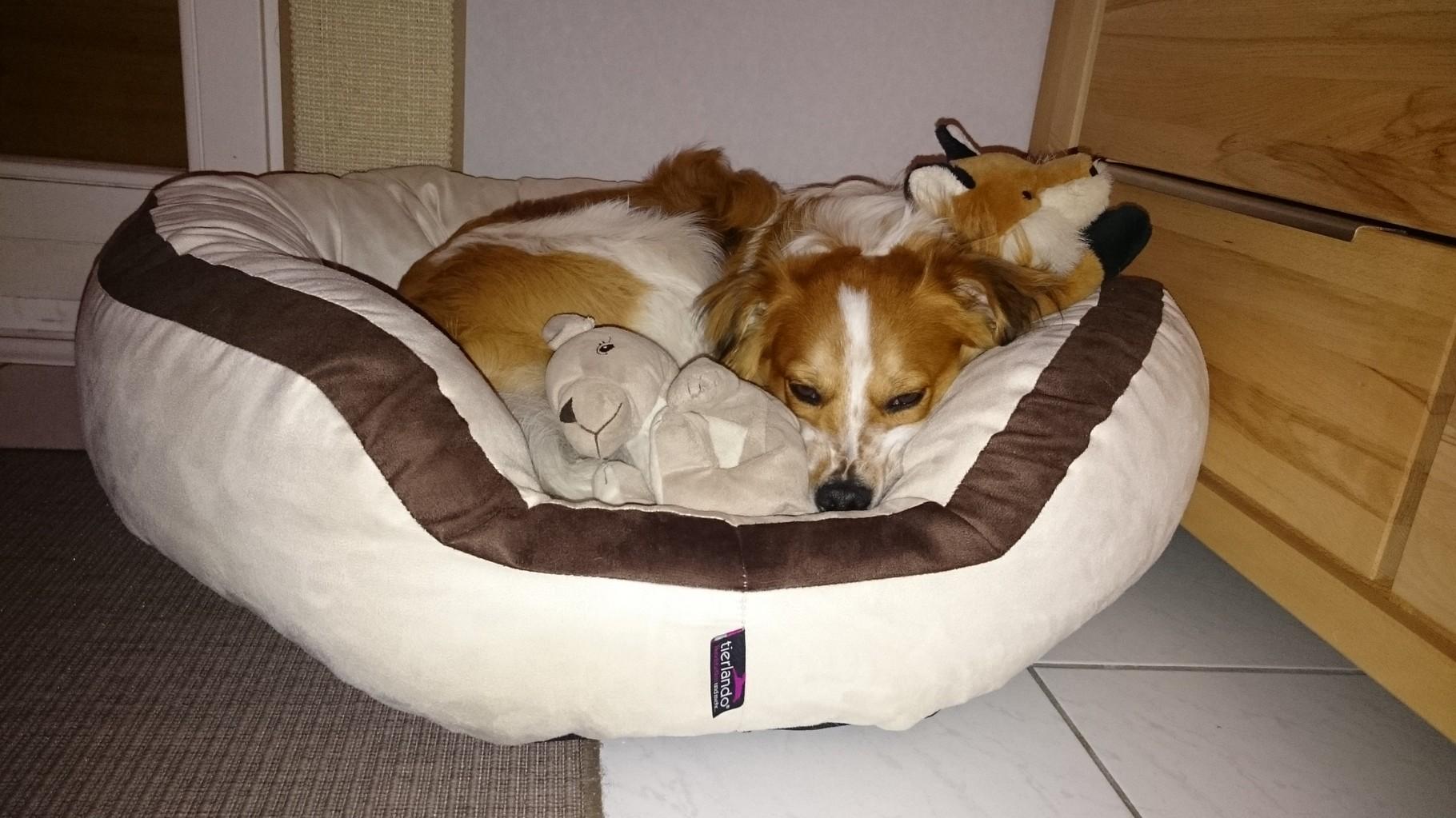 Hab ein neues tolles Bettchen bekommen.