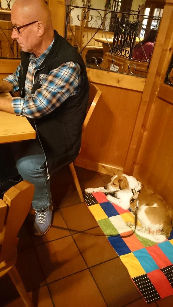 so brav bin ich immer, wenn Herrchen und Frauchen im Restaurant Essen gehen