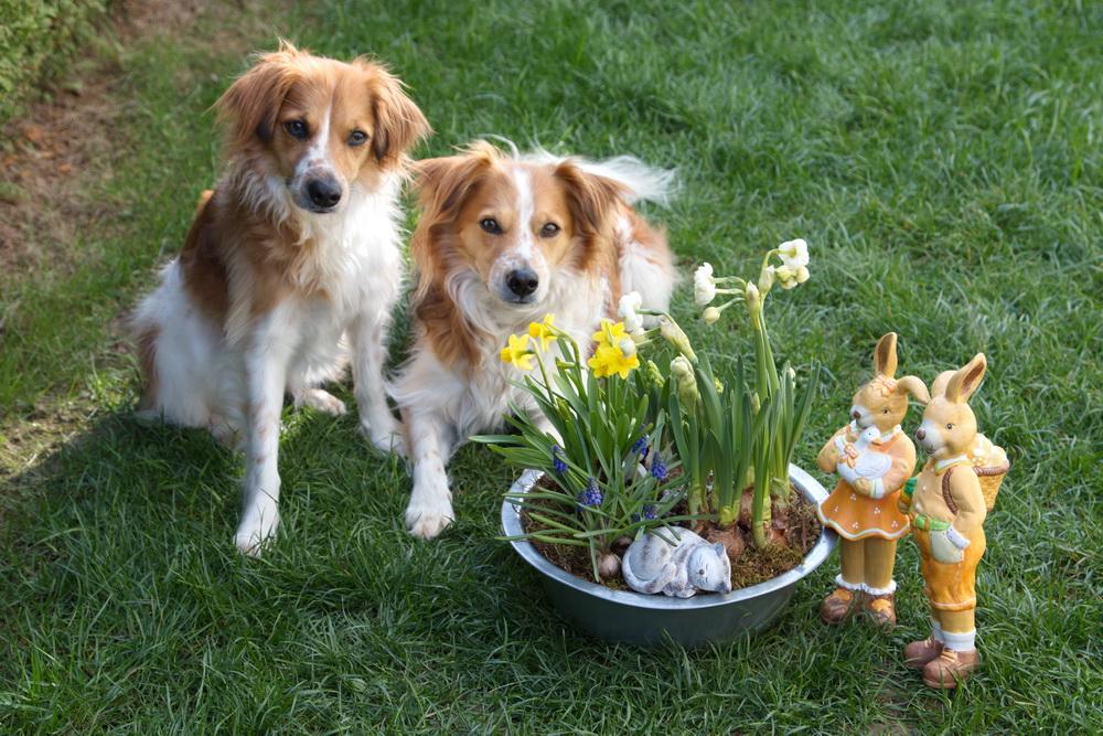 """Ostern...mit diesem Foto haben wir den monatlichen Wettbewerb unserer Tageszeitung """"Gießener Anzeiger""""gewonnen."""