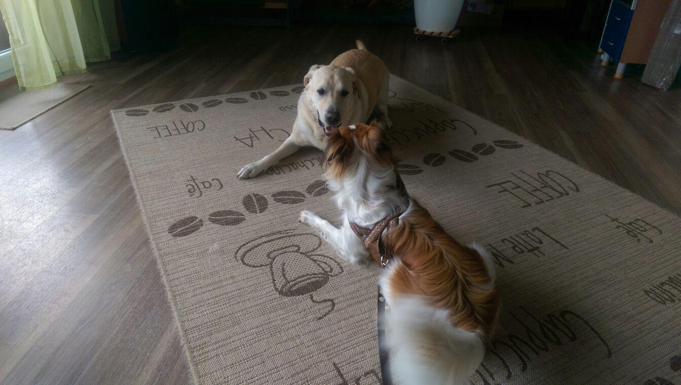 In einer Wohnung mit anderem Hund geht auch ;-)