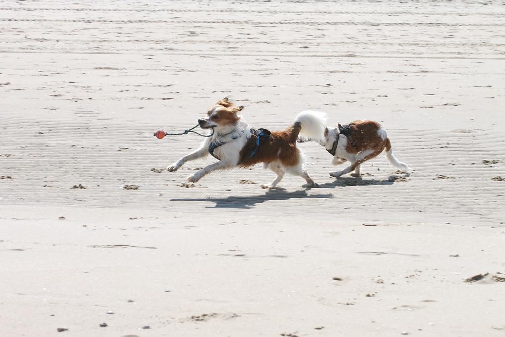 Sausen am Strand mit Dayla
