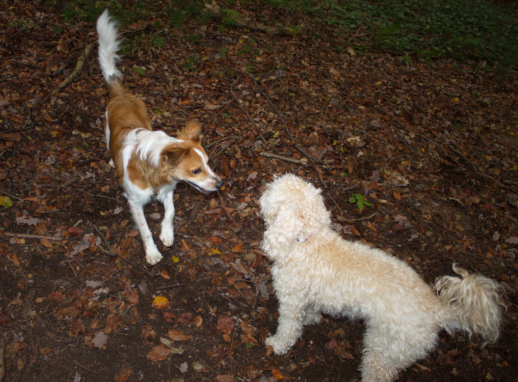 Treffen mit anderen Hunden war bis jetzt immer cool ;-)