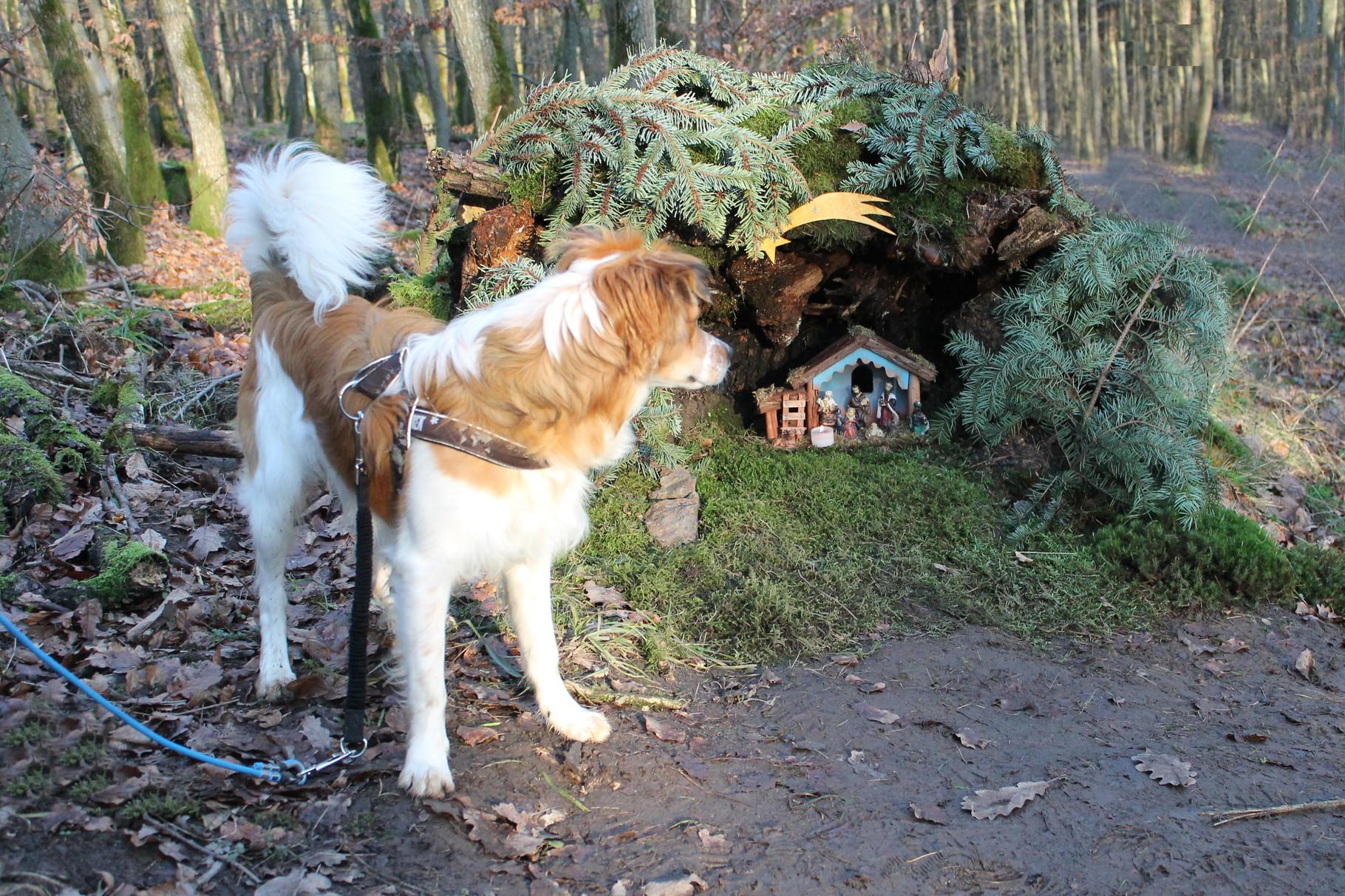 Hier im Wald gibts in der Weihnachtszeit einen Krippenweg, da musste ich doch auch mal nachsehen.