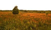 Moor-Heide