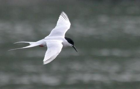 http://www.rarebirdspain.net