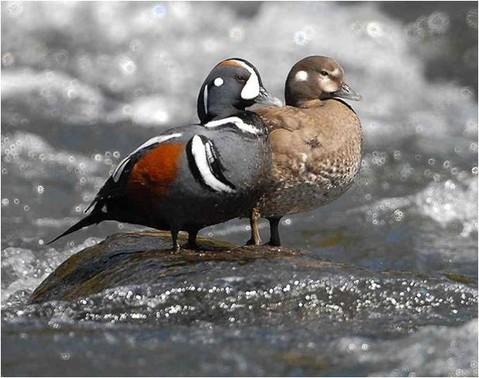 http://www.utahbirds.org