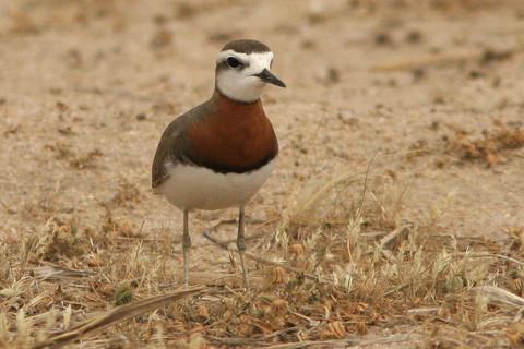 http://www.birdsofkuwait.com