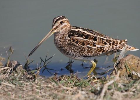 http://www.birding.in