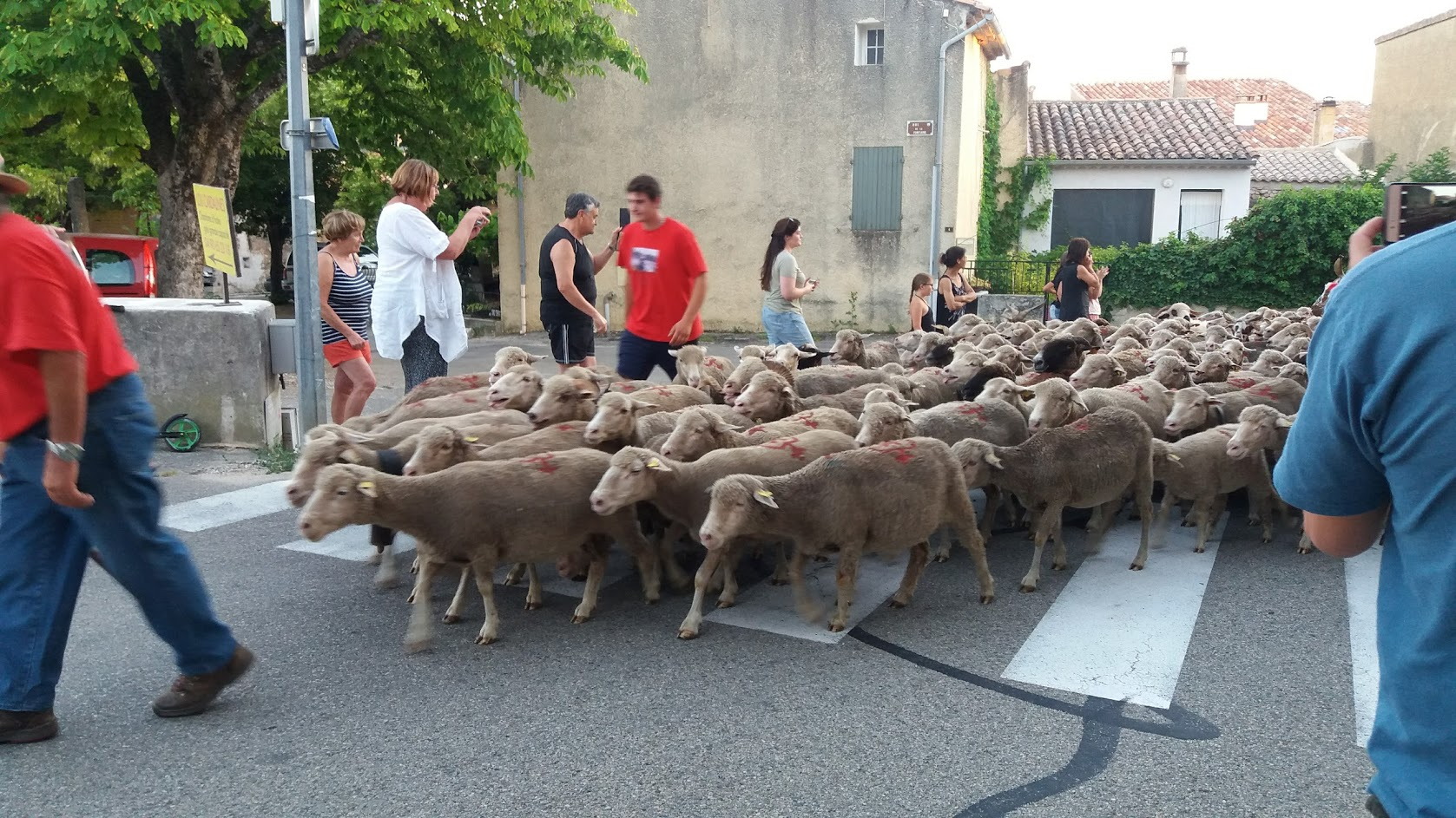 loucardalines-gite-stcolombe-bedoin-transhumance-vaucluse-provence-famille -vacances