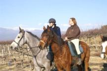 Gite et chambre d'hote a bedoin - Vaucluse-Centre équestre - Poney club - Promenades à cheval