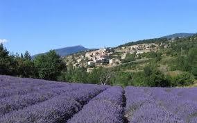 Gite et cambres d'hotes-Lou Cardalines-lavande-mont Ventoux-Vaucluse