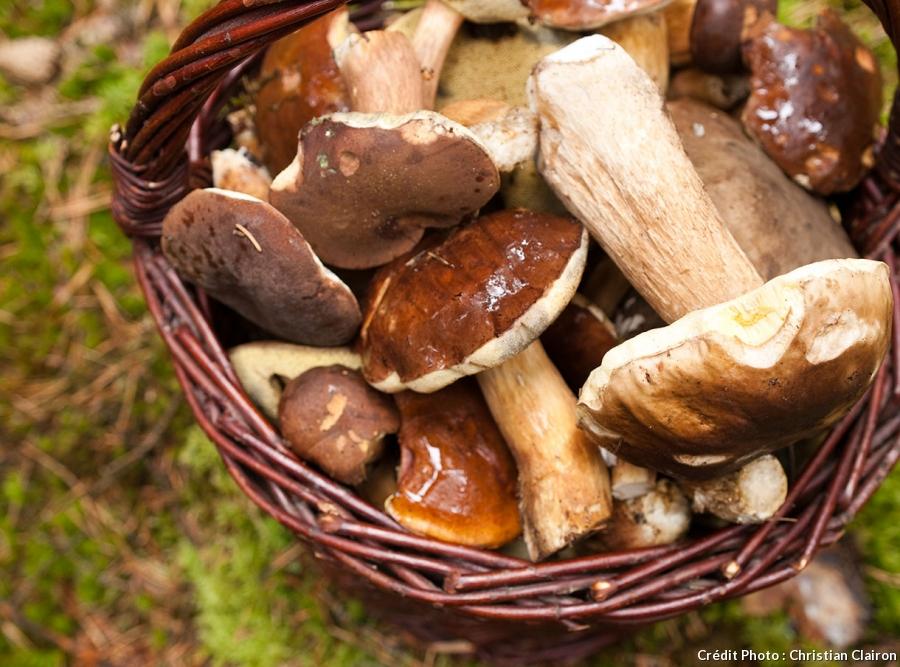 Cueillette des champignons - Marguerite Ferry - Urban Garden Designer - Bruxelles - Blog Jardin Belgique