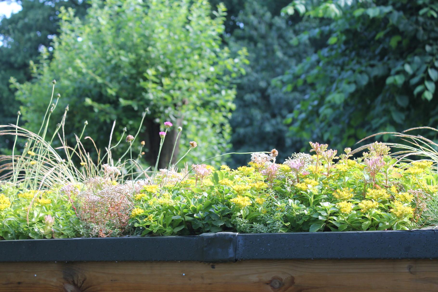 Insektenhotel mit Gründach von re-natur
