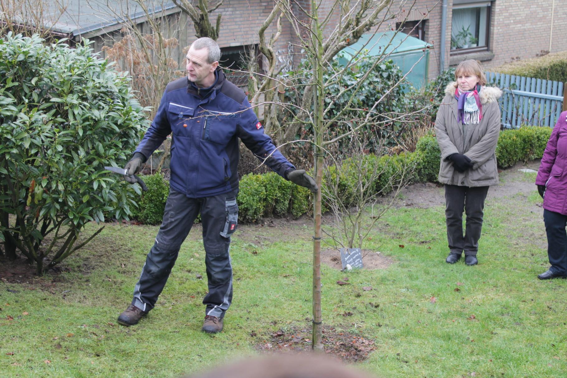 Am Zierapfel erklärt Torsten Hennings zunächst die Wuchshöhen der heutigen Apfelbäume und das trotz angegebener Wuchshöhe Bäume immer weiterentwickelt werden können.