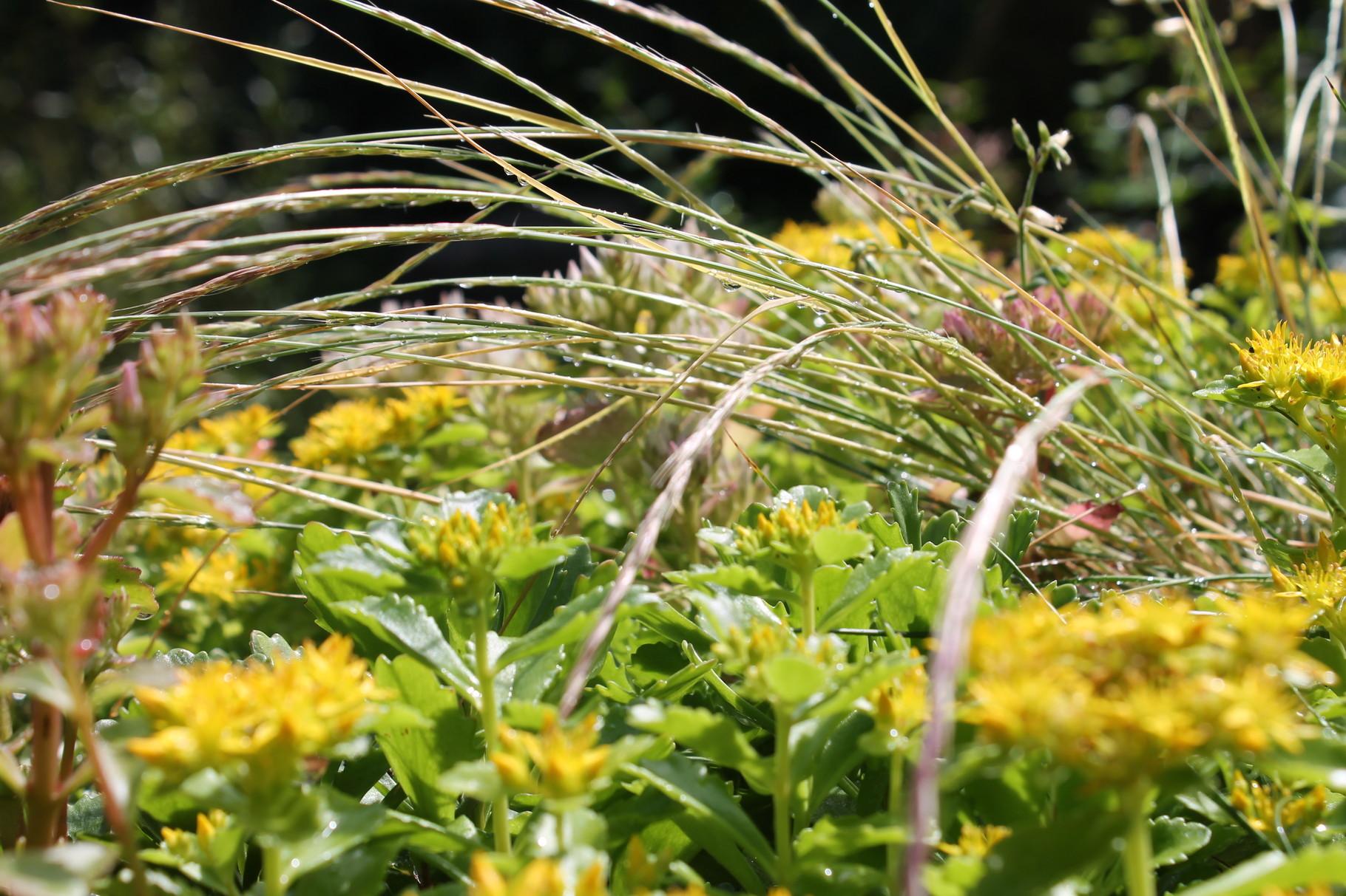 Insektenhotel mit Gras - selten aber wir wollten dies